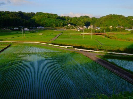 農地の相続について
